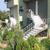Apartments Flower House , Sunny Beach, Black Sea Coast, Bulgaria - Image 3