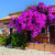 Efrosini Village , Katelios, Kefalonia, Greek Islands - Image 5